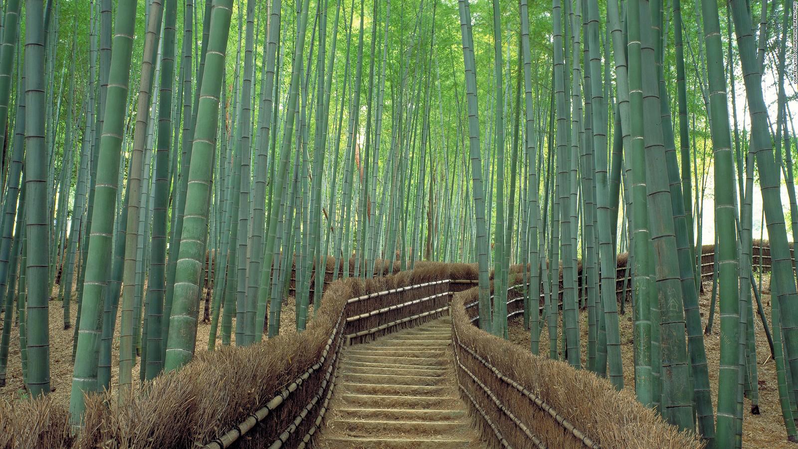 Most Beautiful Japan